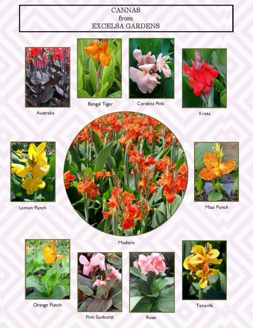 Cannas_Page_Spring_2015-page-001
